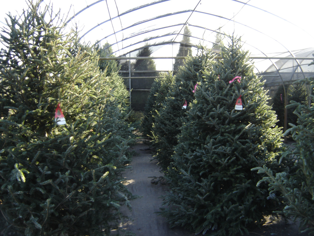 Ergle Christmas Tree Farm.Christmas Trees