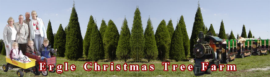 Ergle Christmas Tree Farm.About